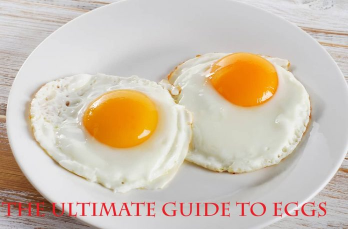 The Ultimate Guide to Eggs